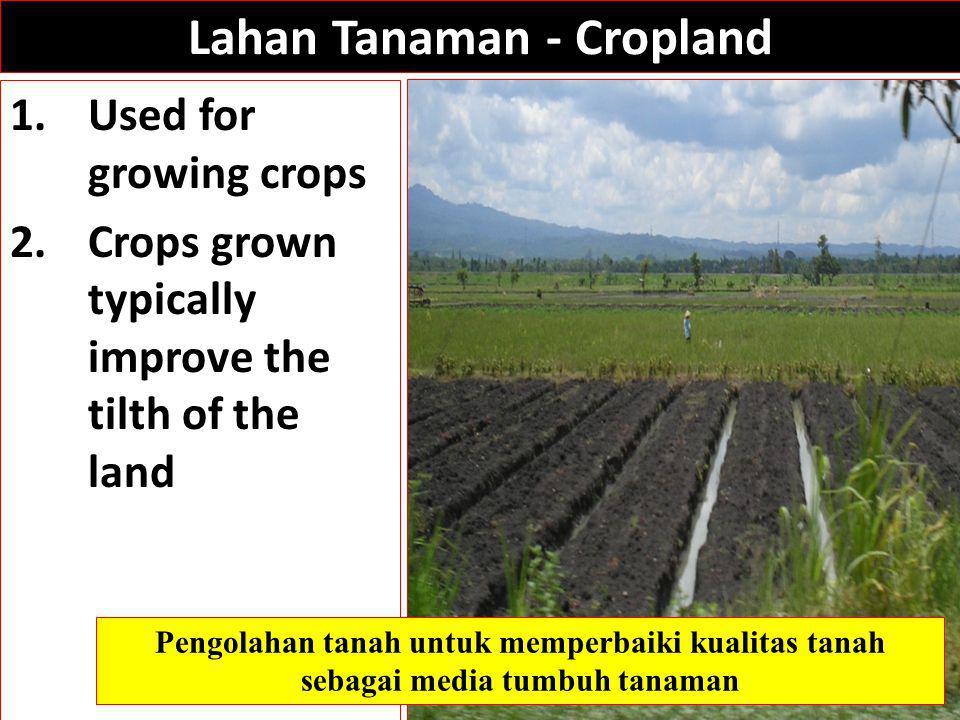 Lahan Tanaman - Cropland 1.Used for growing crops 2.Crops grown typically improve the tilth of the land Pengolahan tanah untuk memperbaiki kualitas tanah sebagai media tumbuh tanaman
