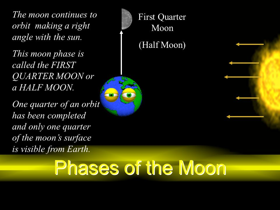 Phases of the Moon The moon continues to orbit making a right angle with the sun. This moon phase is called the FIRST QUARTER MOON or a HALF MOON. One