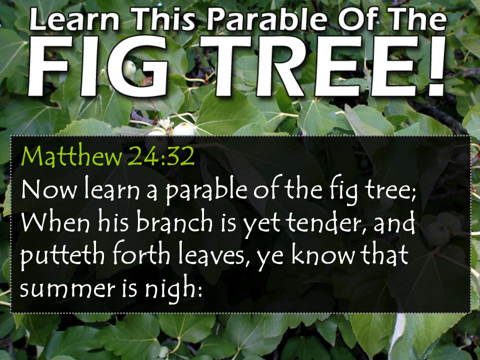 Matthew 24:32 Now learn a parable of the fig tree; When his branch is yet tender, and putteth forth leaves, ye know that summer is nigh: