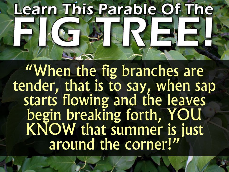 """""""When the fig branches are tender, that is to say, when sap starts flowing and the leaves begin breaking forth, YOU KNOW that summer is just around th"""