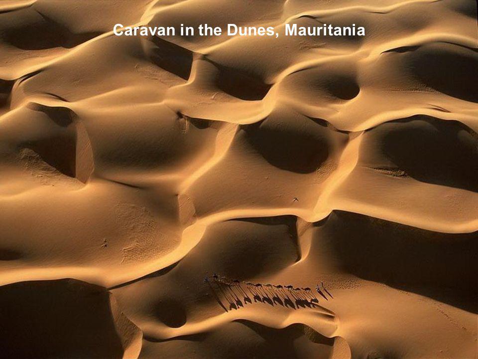 Caravan in the Dunes, Mauritania
