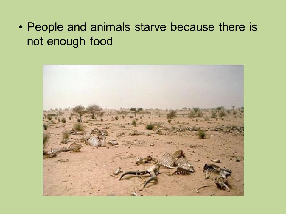 People and animals starve because there is not enough food.