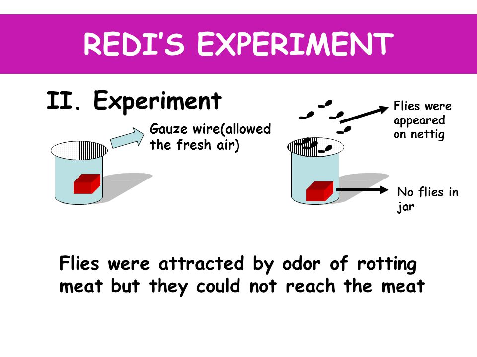 II. Experiment REDI'S EXPERIMENT Gauze wire(allowed the fresh air) Flies were appeared on nettig No flies in jar Flies were attracted by odor of rotti