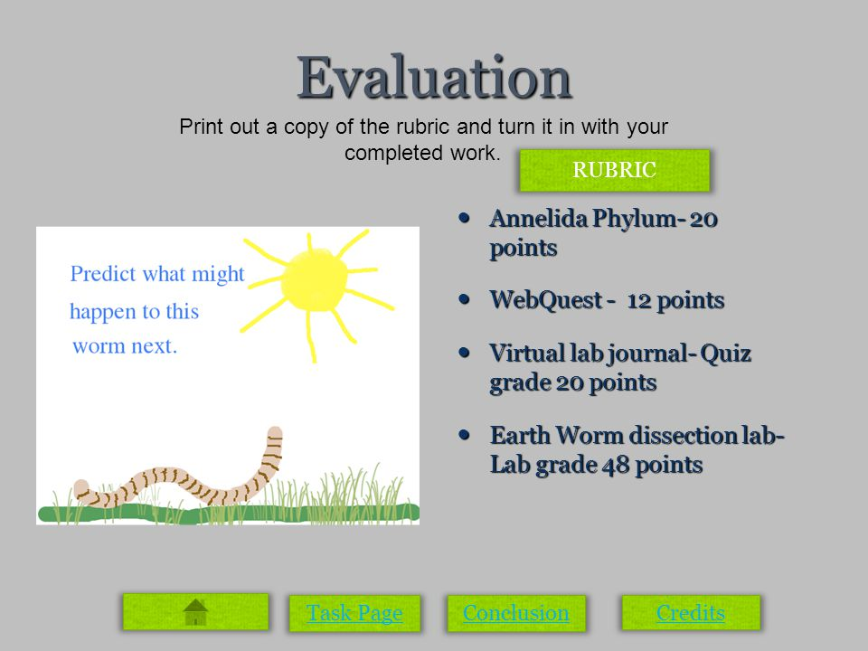 Evaluation Annelida Phylum- 20 points Annelida Phylum- 20 points WebQuest - 12 points WebQuest - 12 points Virtual lab journal- Quiz grade 20 points Virtual lab journal- Quiz grade 20 points Earth Worm dissection lab- Lab grade 48 points Earth Worm dissection lab- Lab grade 48 points Task PageConclusion Credits Print out a copy of the rubric and turn it in with your completed work.