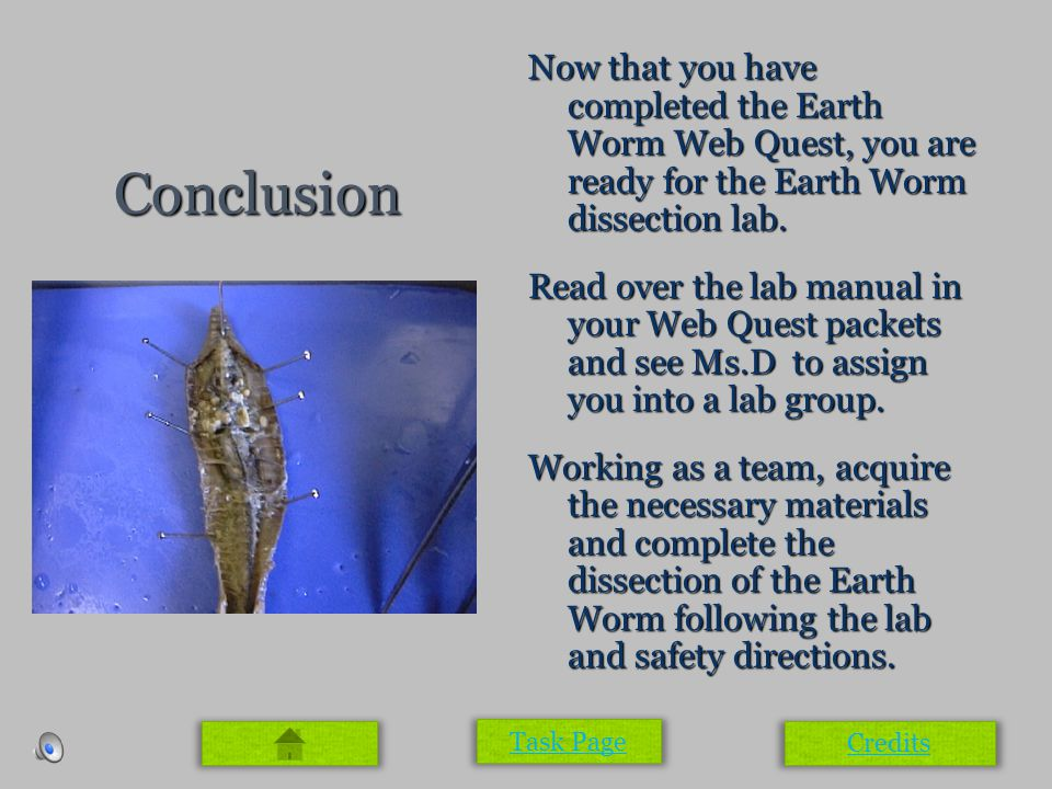 Conclusion Now that you have completed the Earth Worm Web Quest, you are ready for the Earth Worm dissection lab. Read over the lab manual in your Web
