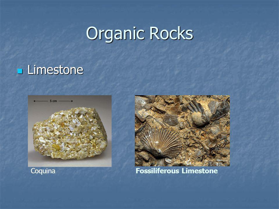 Organic Rocks Limestone Limestone CoquinaFossiliferous Limestone