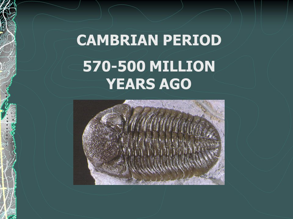 CAMBRIAN PERIOD 570-500 MILLION YEARS AGO