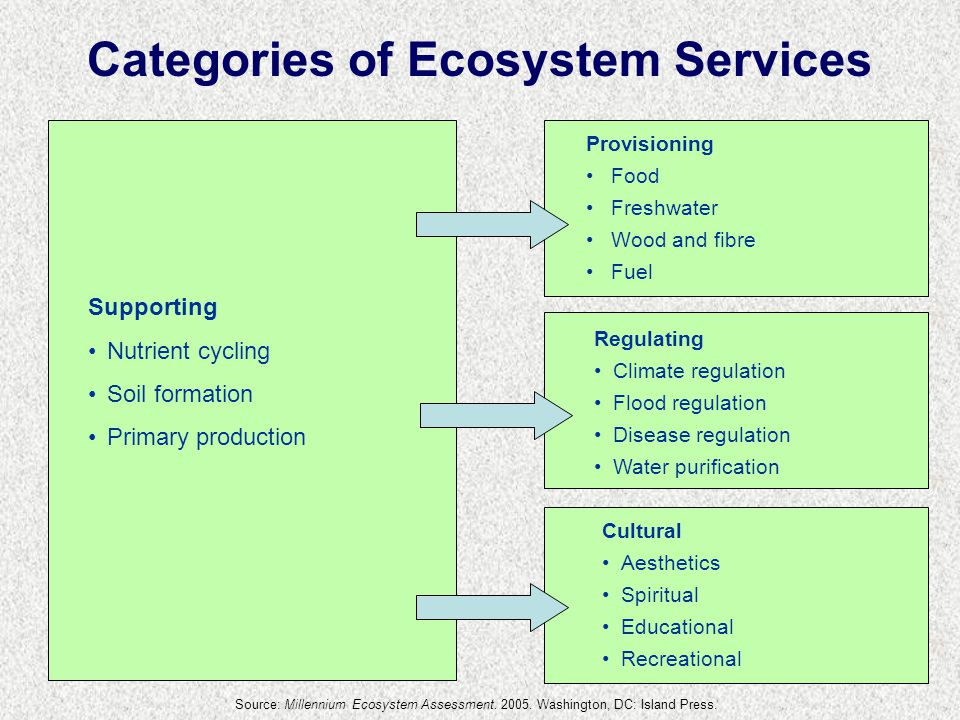 Supporting Nutrient cycling Soil formation Primary production Provisioning Food Freshwater Wood and fibre Fuel Regulating Climate regulation Flood regulation Disease regulation Water purification Cultural Aesthetics Spiritual Educational Recreational Categories of Ecosystem Services Source: Millennium Ecosystem Assessment.