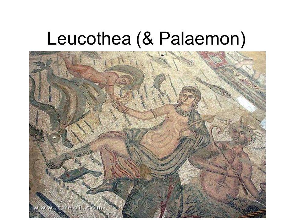 Leucothea (& Palaemon)