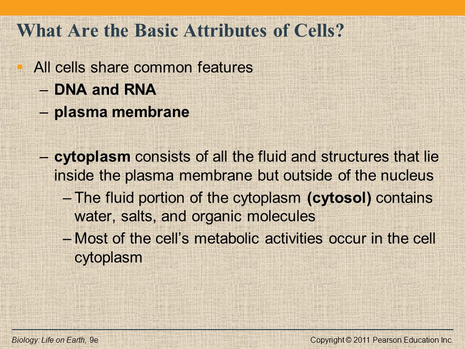 Copyright © 2011 Pearson Education Inc.Biology: Life on Earth, 9e What Are the Basic Attributes of Cells?  All cells share common features –DNA and R