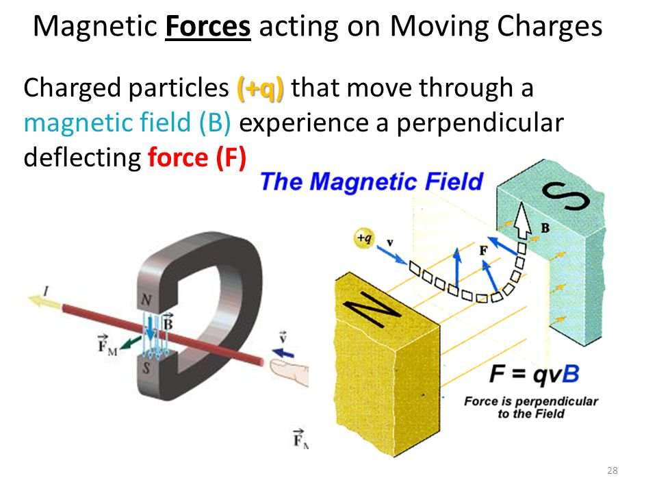 Magnetic Forces acting on Moving Charges 28 (+q) Charged particles (+q) that move through a magnetic field (B) experience a perpendicular deflecting f