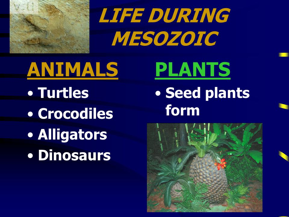 MESOZOIC ERA 3rd Era3rd Era Middle Life Middle Life Age of Reptiles and DinosaursAge of Reptiles and Dinosaurs lasted 160 MILLION yearslasted 160 MILLION years