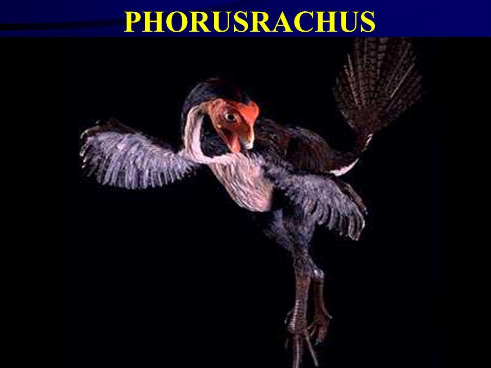 FIRST BIRD?