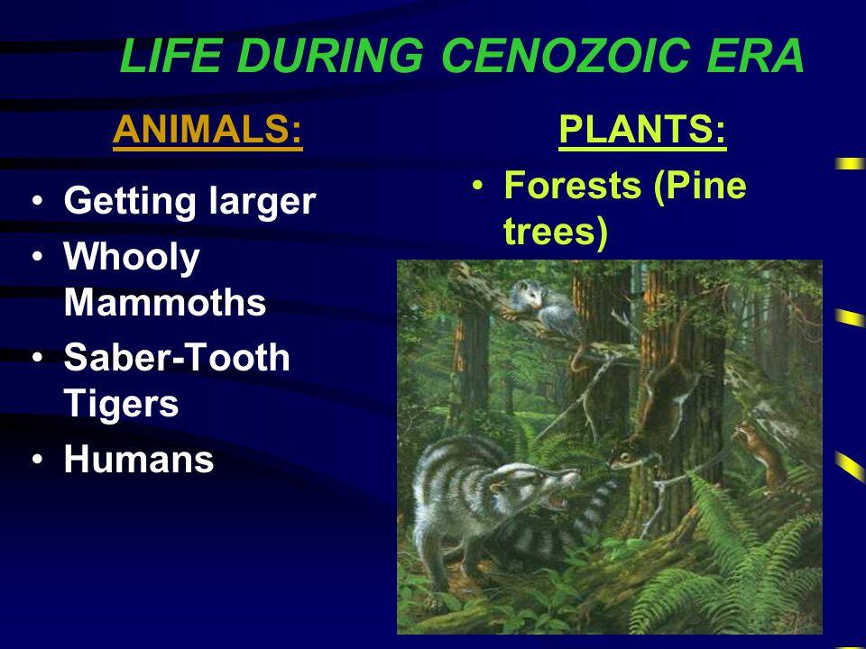 "CENOZOIC ERA 4th Era ""Recent Life"" Age of Mammals 65 Million Years so far...."