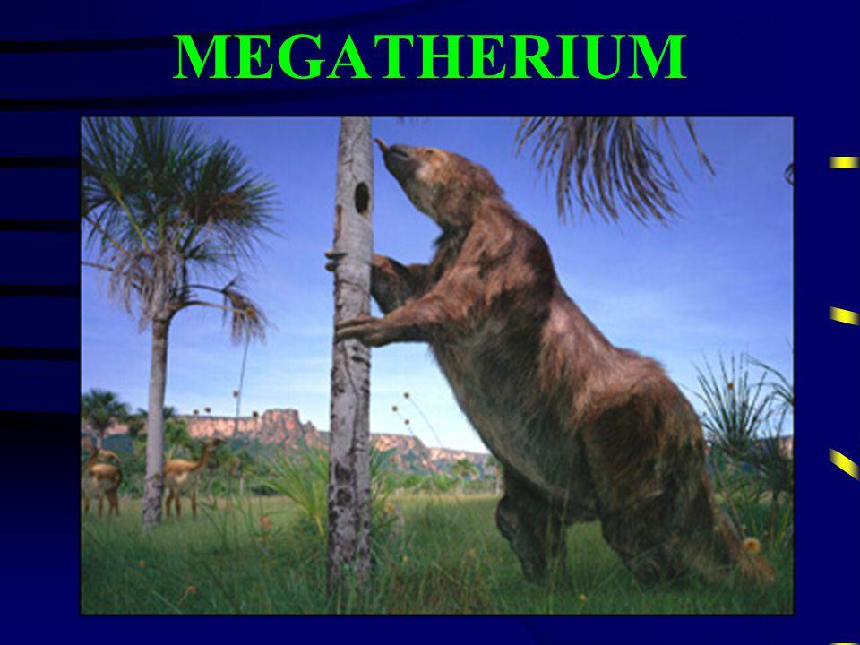 MEGALOSARUS