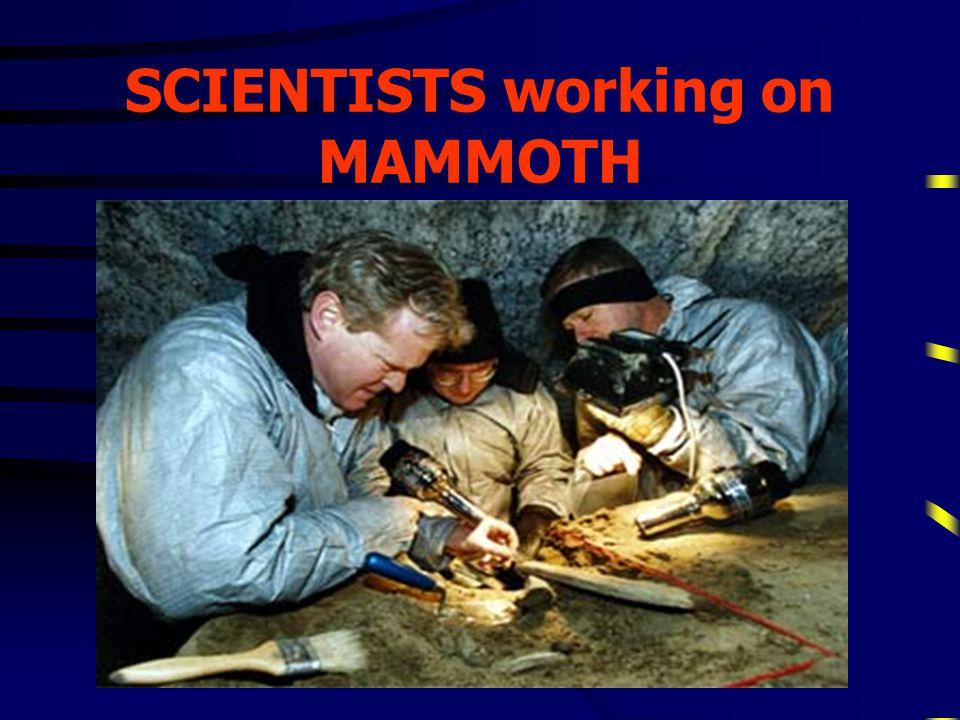 ALGAE found in ICE around the MAMMOTH