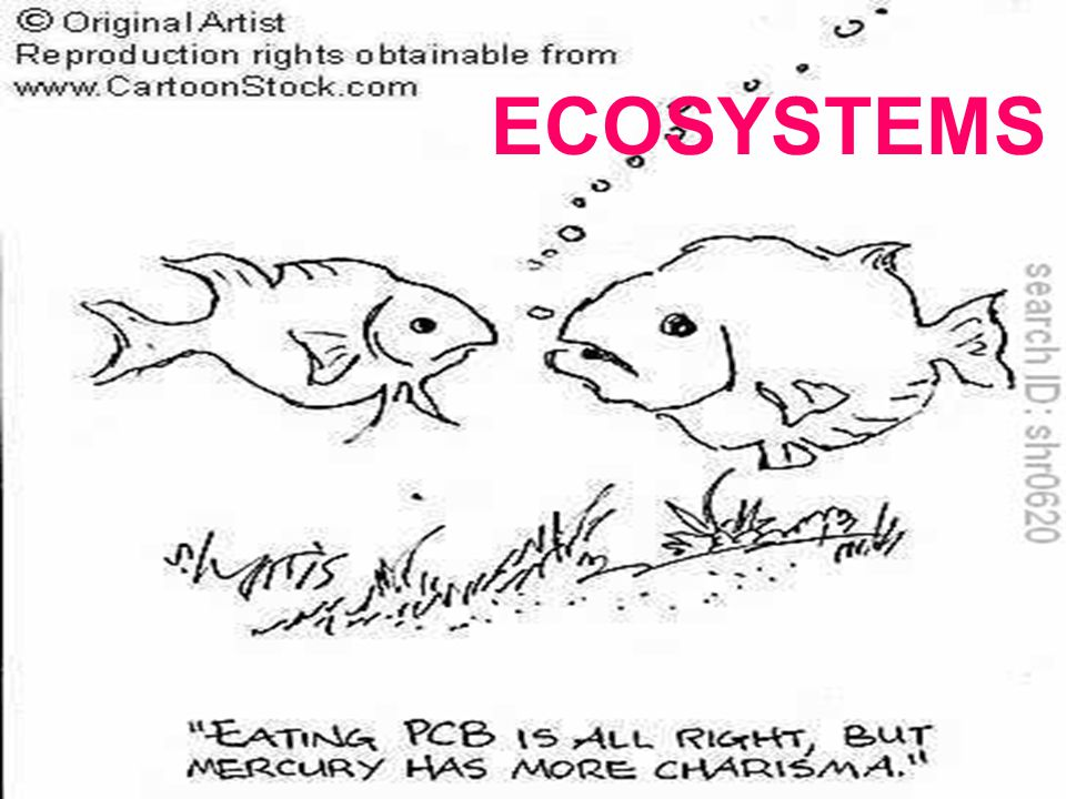 BIOLOGICAL MAGNIFICATION TOXINS BECOME MORE CONCENTRATED IN SUCCESSIVE TROPHIC LEVELS OF A FOOD WEB TOXINS CANNOT BE BROKEN DOWN BIOLOGICALLY BY NORMAL CHEMICAL MEANS THEY MAGNIFY IN CONCENTRATION AS THEY MOVE THROUGH THE FOOD CHAIN
