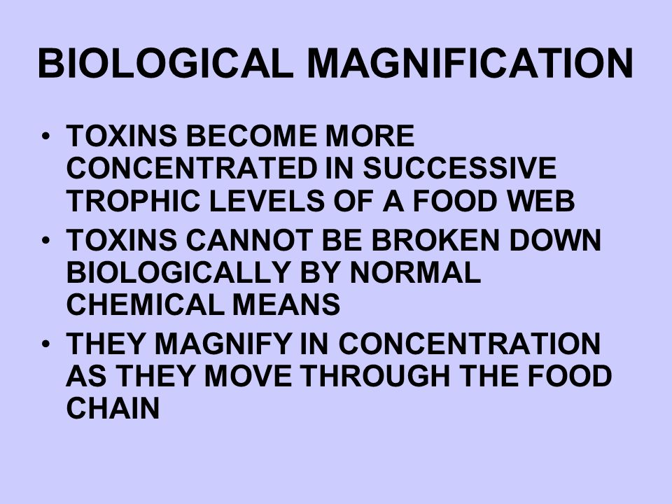 BIOLOGICAL MAGNIFICATION TOXINS BECOME MORE CONCENTRATED IN SUCCESSIVE TROPHIC LEVELS OF A FOOD WEB TOXINS CANNOT BE BROKEN DOWN BIOLOGICALLY BY NORMA