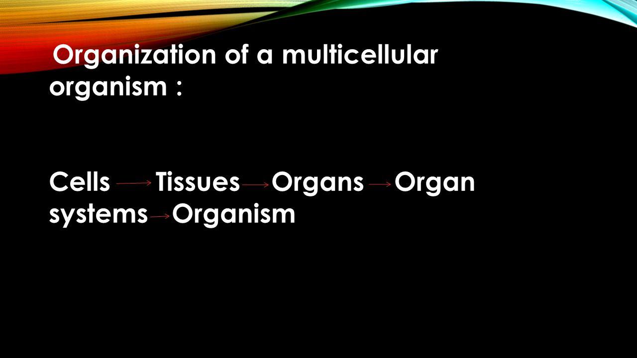 Organization of a multicellular organism : Cells Tissues Organs Organ systems Organism