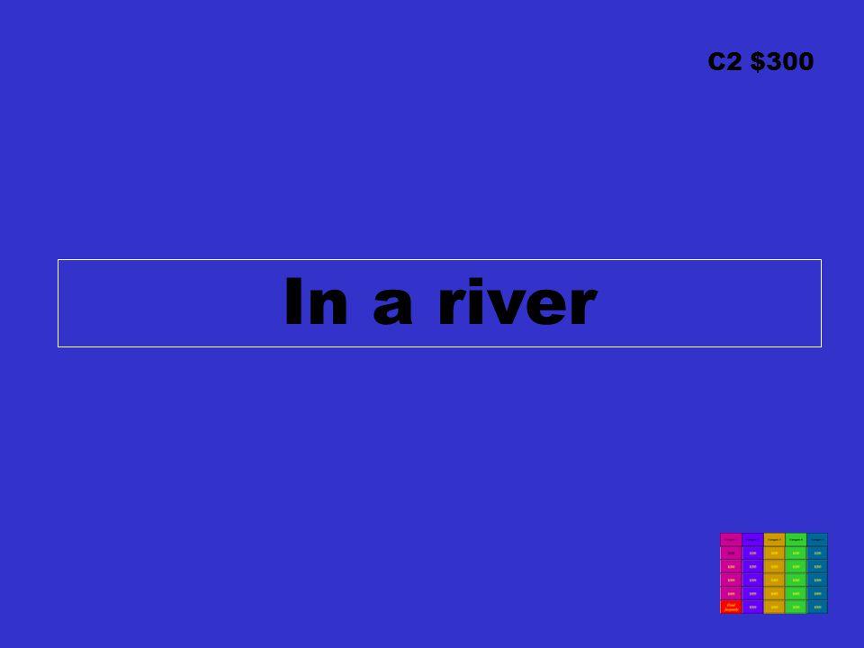 C2 $300 In a river