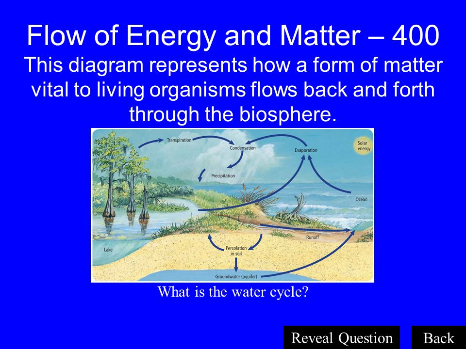 Organisms and Their Relationships 400 The process by which an autotroph converts sunlight, water, and carbon dioxide into food (sugar). What is photos