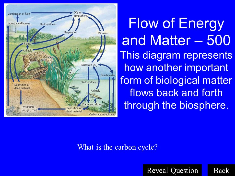 Organisms and Their Relationships 500 All the levels of organization of life within the biosphere, listed from least to greatest. What are organisms,