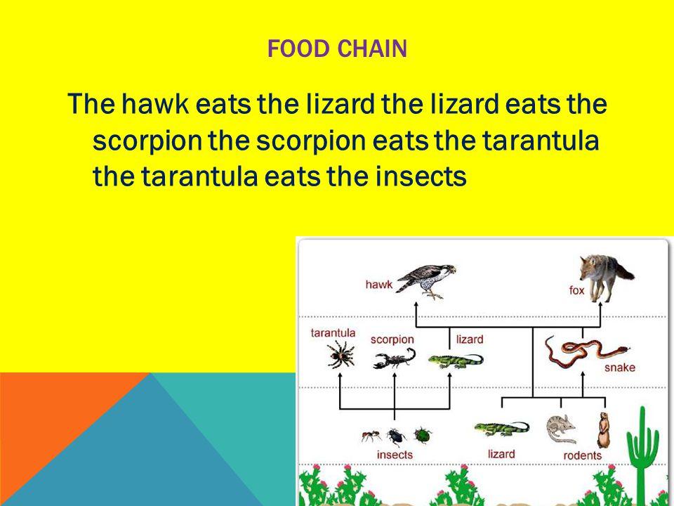 FOOD CHAIN The hawk eats the lizard the lizard eats the scorpion the scorpion eats the tarantula the tarantula eats the insects