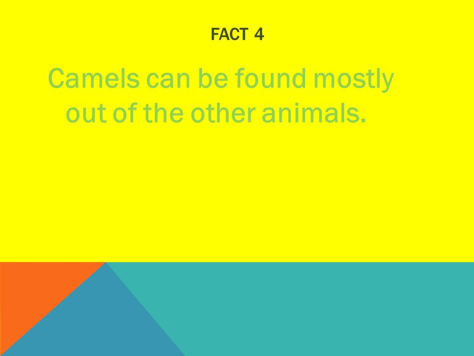 FACT 4 Camels can be found mostly out of the other animals.
