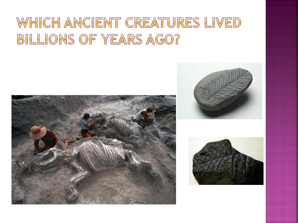  When an animal or plant dies, it sometimes leaves a mark or it remains in a rock.