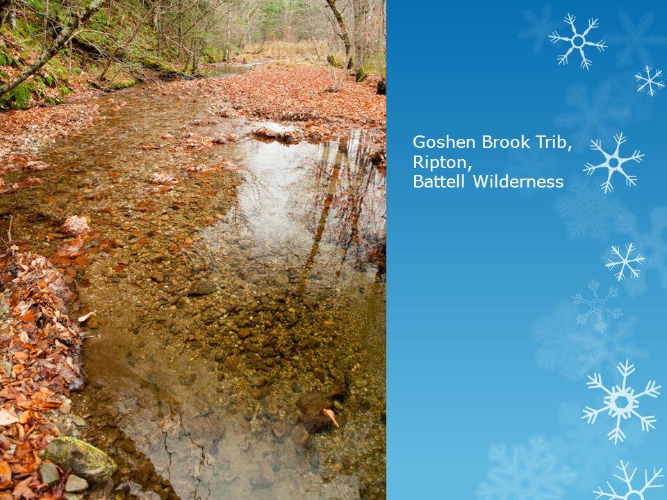 Goshen Brook Trib, Ripton, Battell Wilderness