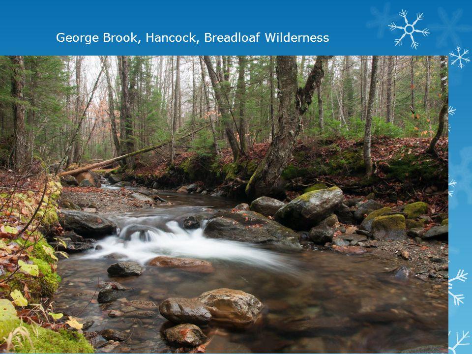 George Brook, Hancock, Breadloaf Wilderness