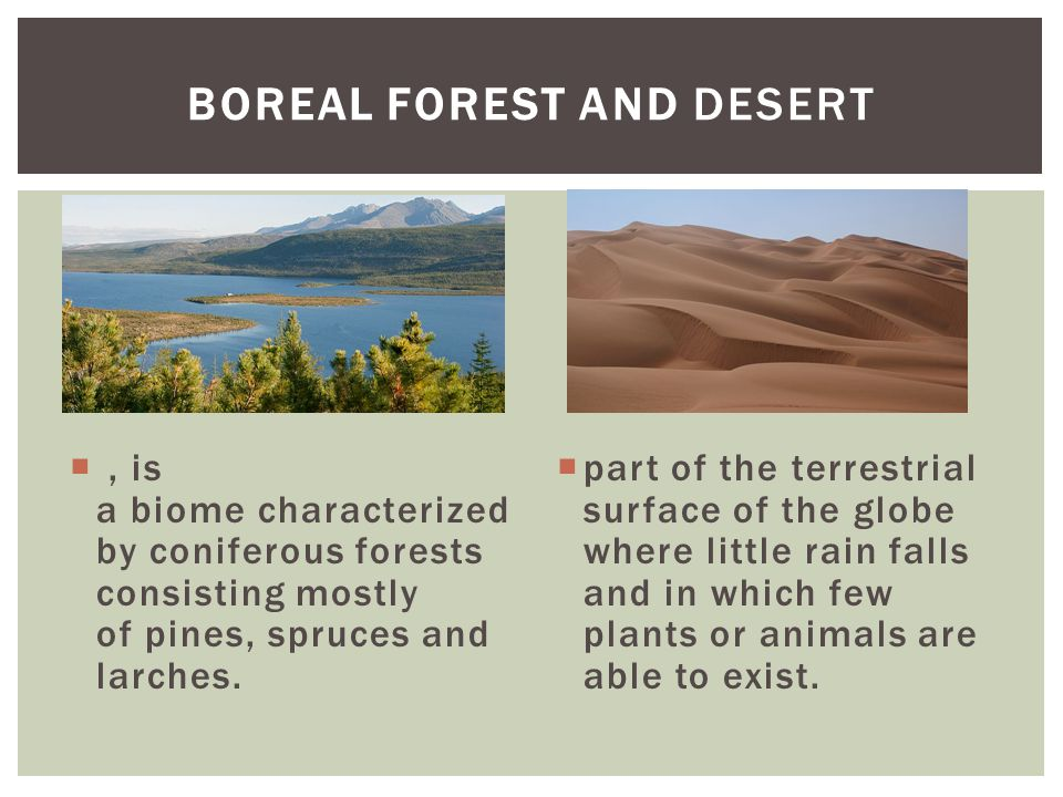 , is a biome characterized by coniferous forests consisting mostly of pines, spruces and larches.  part of the terrestrial surface of the globe wher