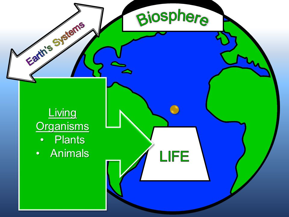 Living Organisms PlantsPlants AnimalsAnimals Living Organisms PlantsPlants AnimalsAnimals