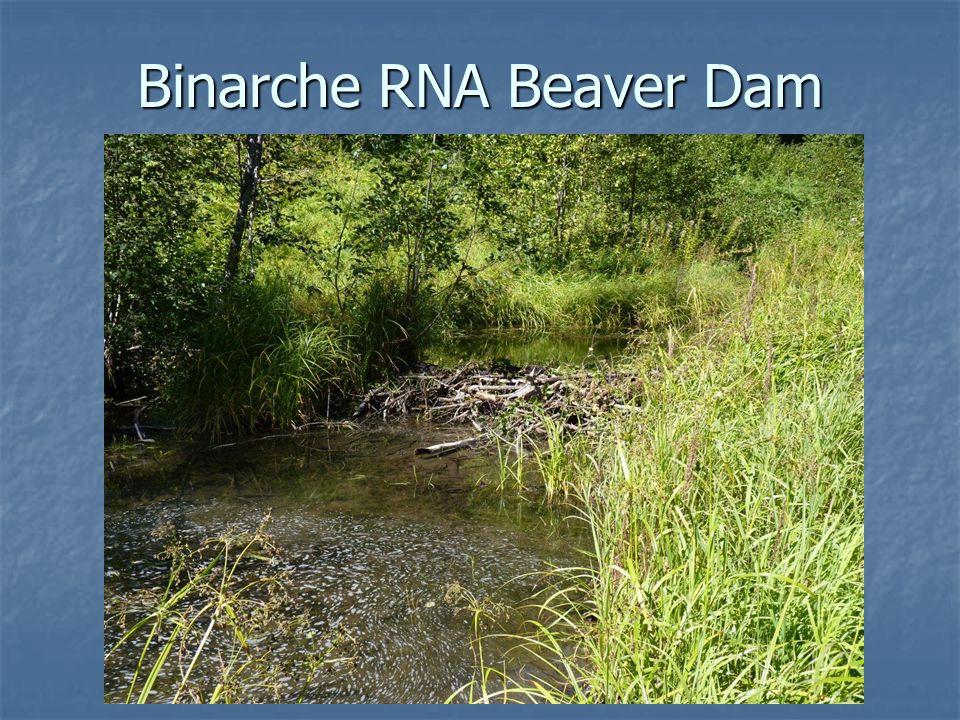 Binarche RNA Beaver Dam