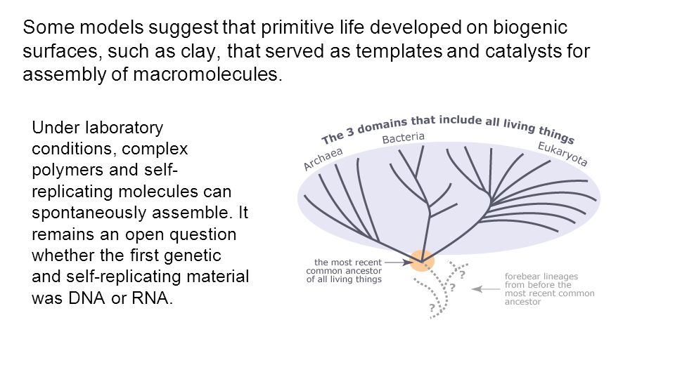 Some models suggest that primitive life developed on biogenic surfaces, such as clay, that served as templates and catalysts for assembly of macromolecules.