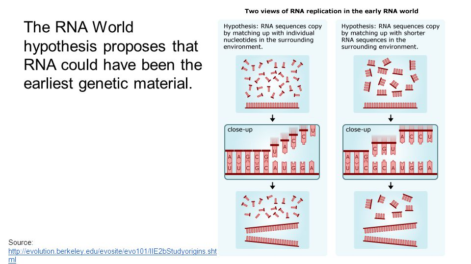 The RNA World hypothesis proposes that RNA could have been the earliest genetic material.