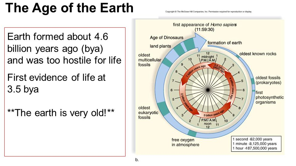 Earth formed about 4.6 billion years ago (bya) and was too hostile for life First evidence of life at 3.5 bya **The earth is very old!** The Age of the Earth