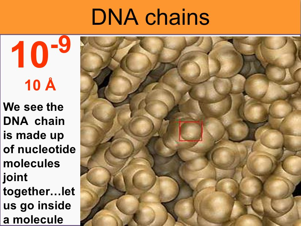 Under this microscopi c view, we are able to see the DNA double helix chains 10 -8 100 Å The DNA