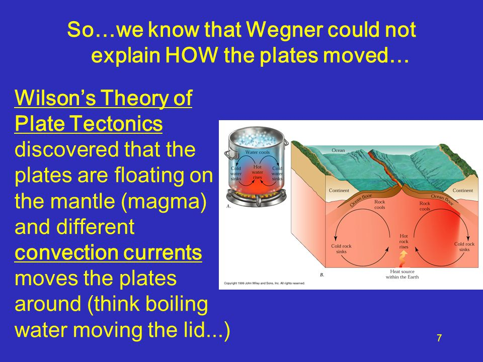 Wilson's Theory of Plate Tectonics discovered that the plates are floating on the mantle (magma) and different convection currents moves the plates ar