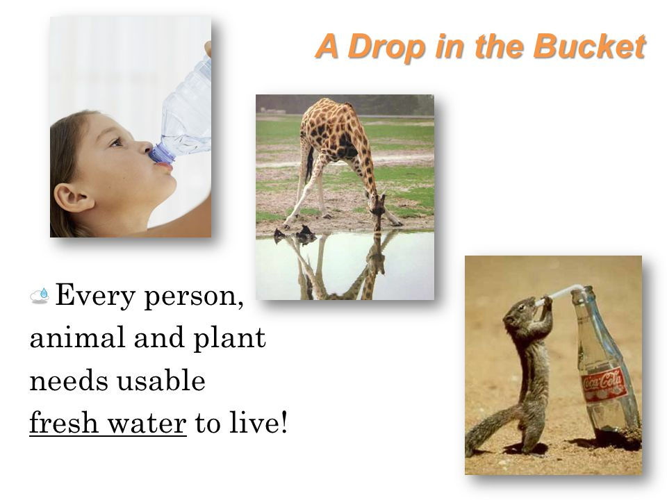A Drop in the Bucket Every person, animal and plant needs usable fresh water to live!