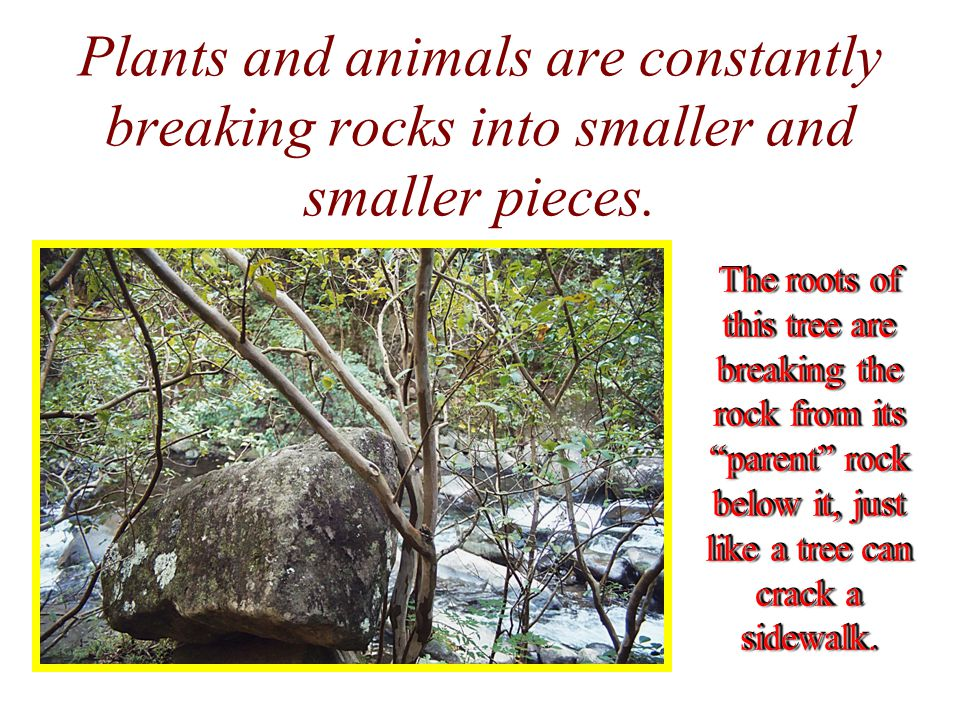 Plants and animals are constantly breaking rocks into smaller and smaller pieces.