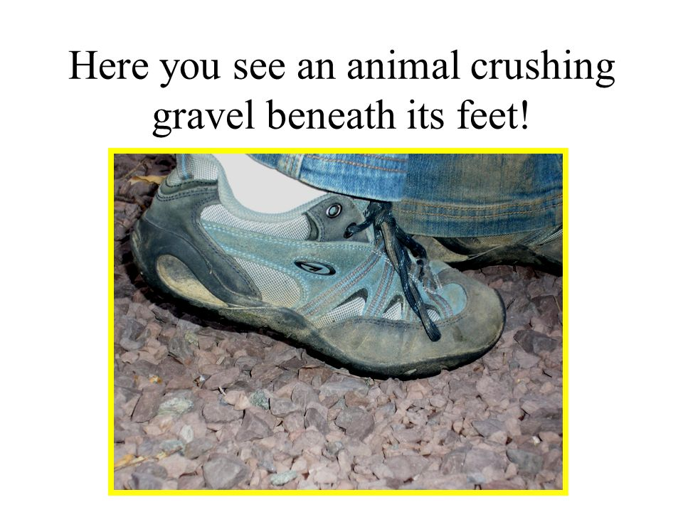 Here you see an animal crushing gravel beneath its feet!