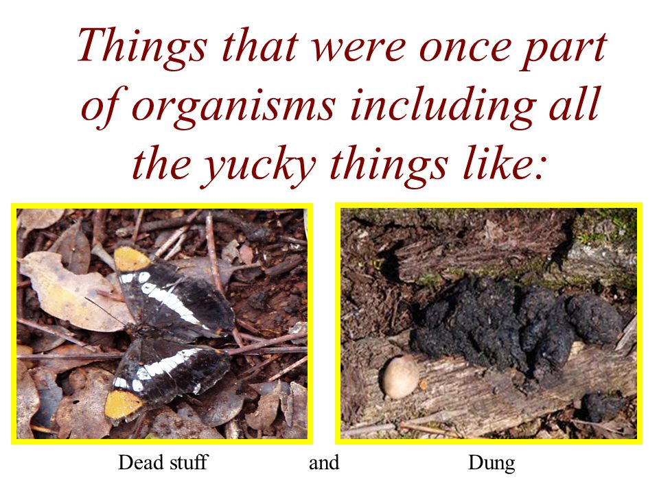 Things that were once part of organisms including all the yucky things like: Dead stuffDungand