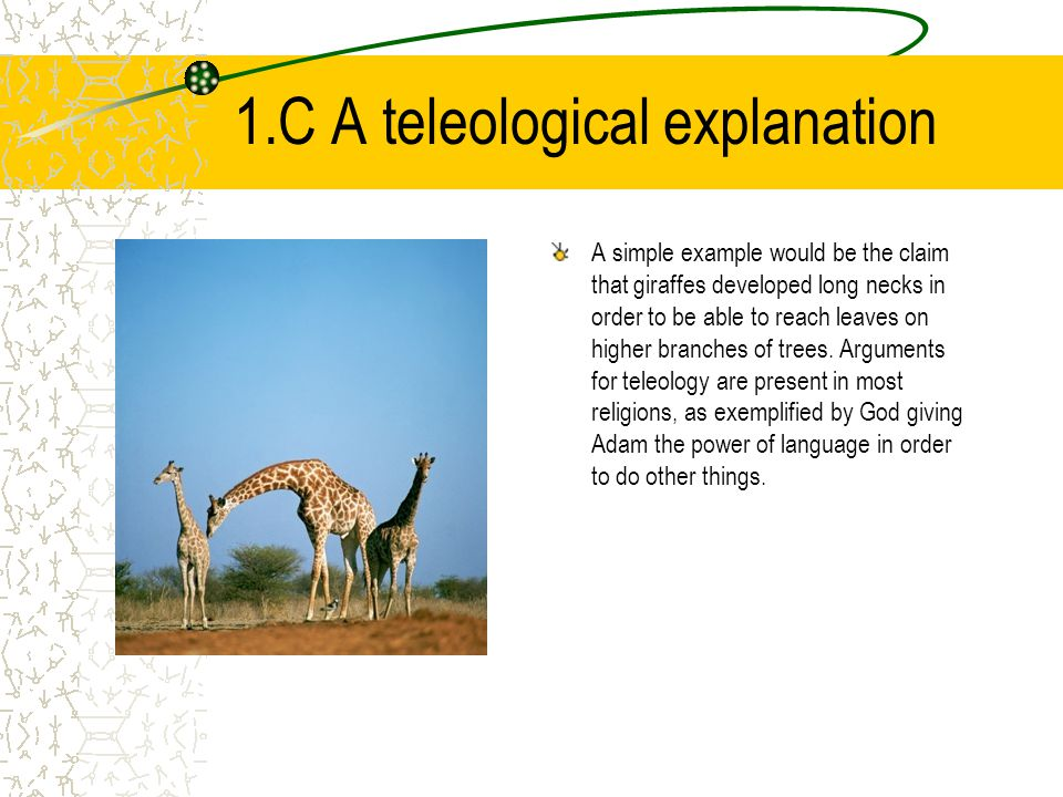 1.C A teleological explanation A simple example would be the claim that giraffes developed long necks in order to be able to reach leaves on higher br