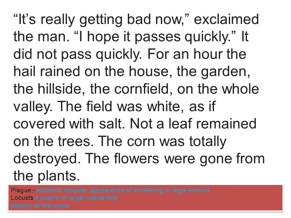 With a satisfied expression he regarded the field of ripe corn with its flowers draped in a curtain of rain.