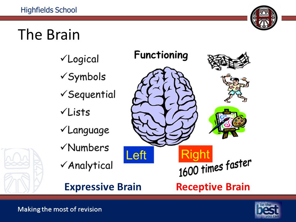 Making the most of revision The Brain Expressive Brain Receptive Brain