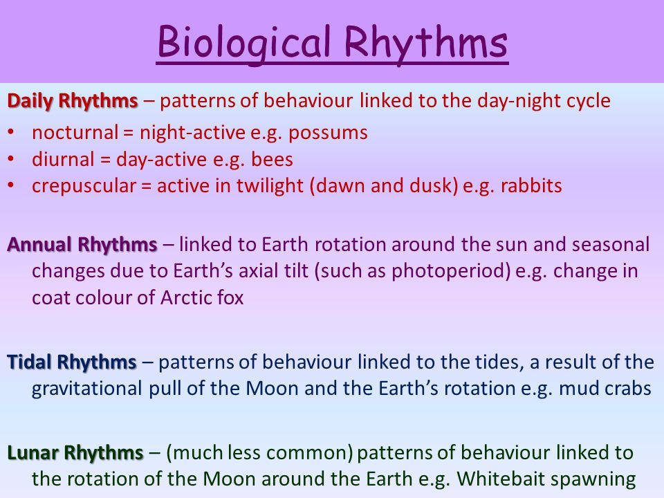 Biological Rhythms Daily Rhythms Daily Rhythms – patterns of behaviour linked to the day-night cycle nocturnal = night-active e.g. possums diurnal = d