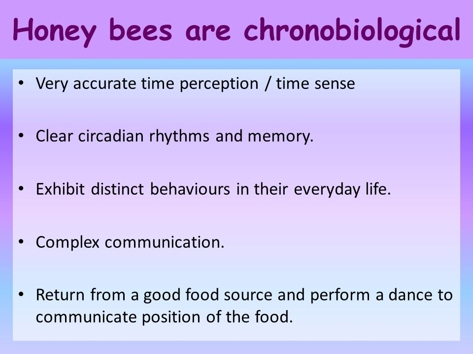 Honey bees are chronobiological Very accurate time perception / time sense Clear circadian rhythms and memory. Exhibit distinct behaviours in their ev