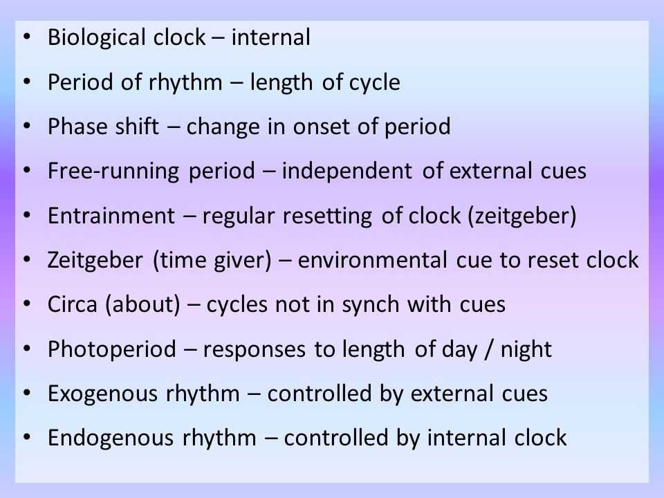 Biological clock – internal Period of rhythm – length of cycle Phase shift – change in onset of period Free-running period – independent of external c