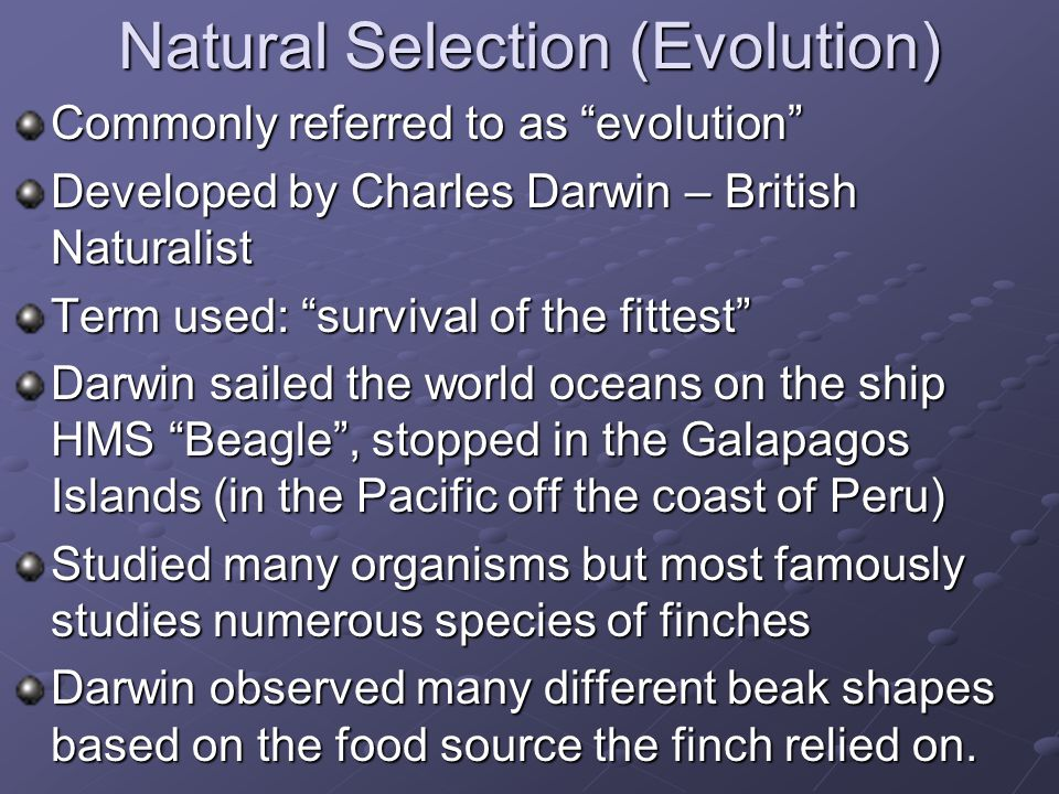 Natural Selection (Evolution) Commonly referred to as evolution Developed by Charles Darwin – British Naturalist Term used: survival of the fittest Darwin sailed the world oceans on the ship HMS Beagle , stopped in the Galapagos Islands (in the Pacific off the coast of Peru) Studied many organisms but most famously studies numerous species of finches Darwin observed many different beak shapes based on the food source the finch relied on.
